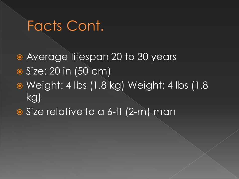 Facts Cont. Average lifespan 20 to 30 years Size: 20 in (50 cm)