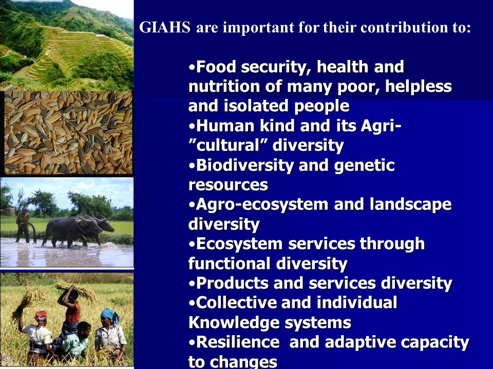 GIAHS are important for their contribution to: