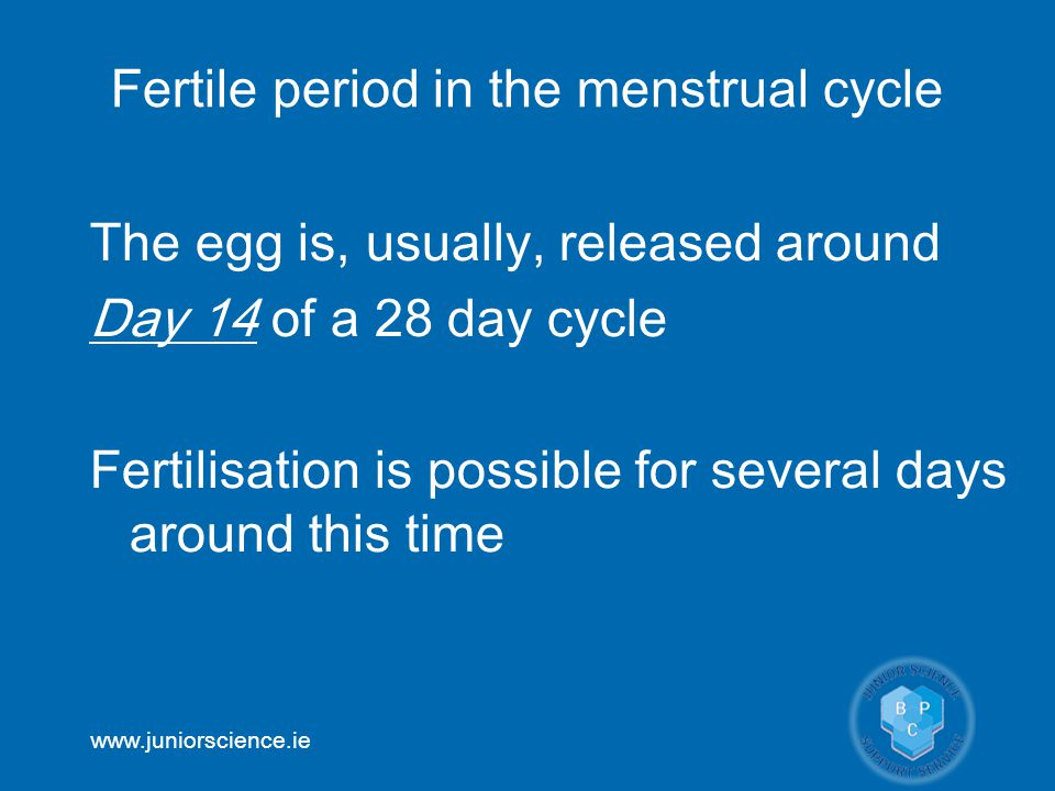 Fertile period in the menstrual cycle