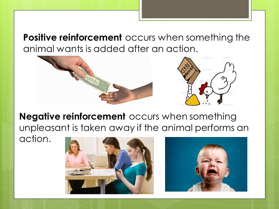 Positive reinforcement occurs when something the animal wants is added after an action.