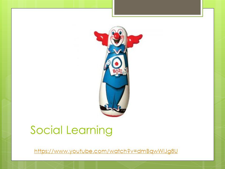 Social Learning https://www.youtube.com/watch v=dmBqwWlJg8U