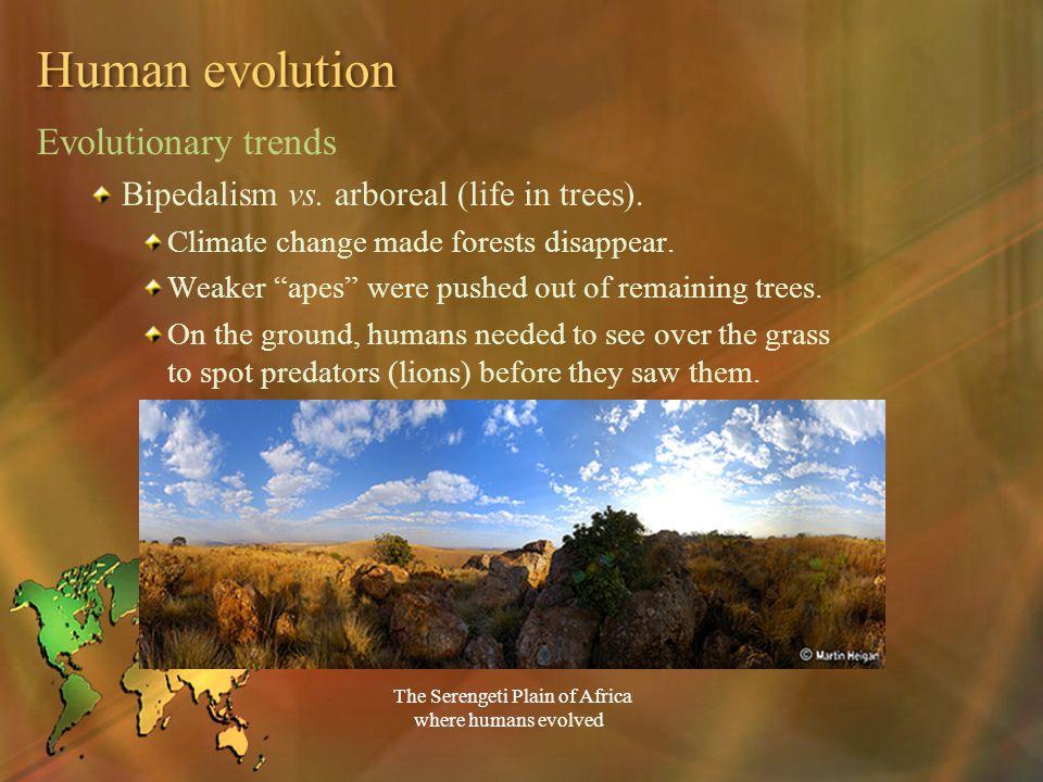 Human evolution Evolutionary trends