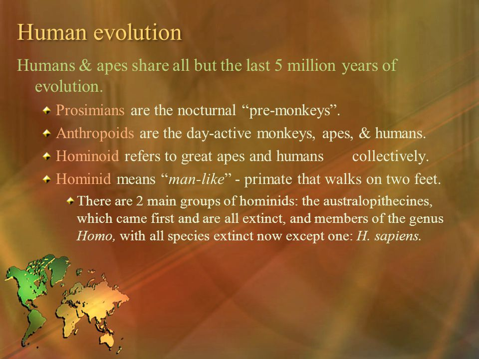 Human evolution Humans & apes share all but the last 5 million years of evolution. Prosimians are the nocturnal pre-monkeys .