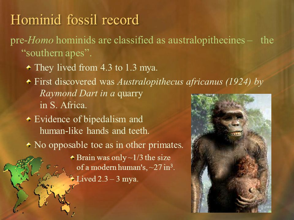Hominid fossil record pre-Homo hominids are classified as australopithecines – the southern apes .