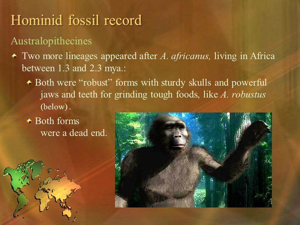 Hominid fossil record Australopithecines