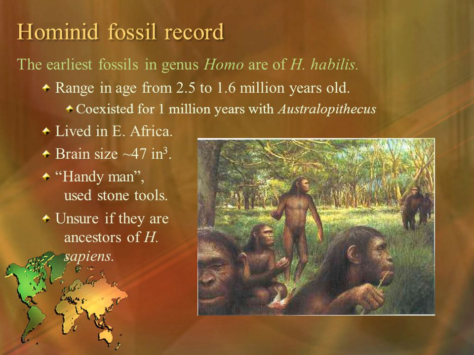 Hominid fossil record The earliest fossils in genus Homo are of H. habilis. Range in age from 2.5 to 1.6 million years old.
