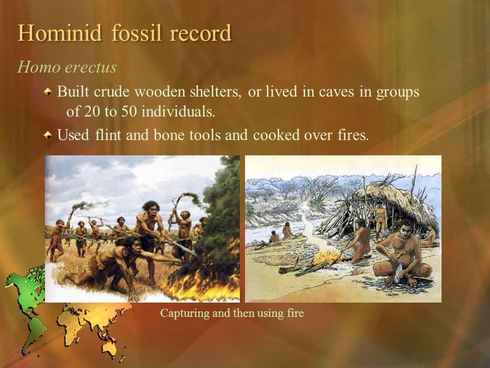 Hominid fossil record Homo erectus