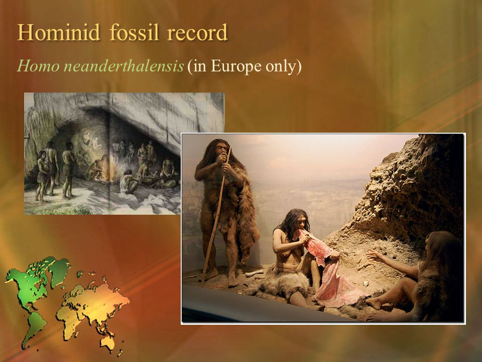 Hominid fossil record Homo neanderthalensis (in Europe only)