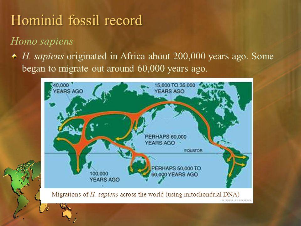 Hominid fossil record Homo sapiens