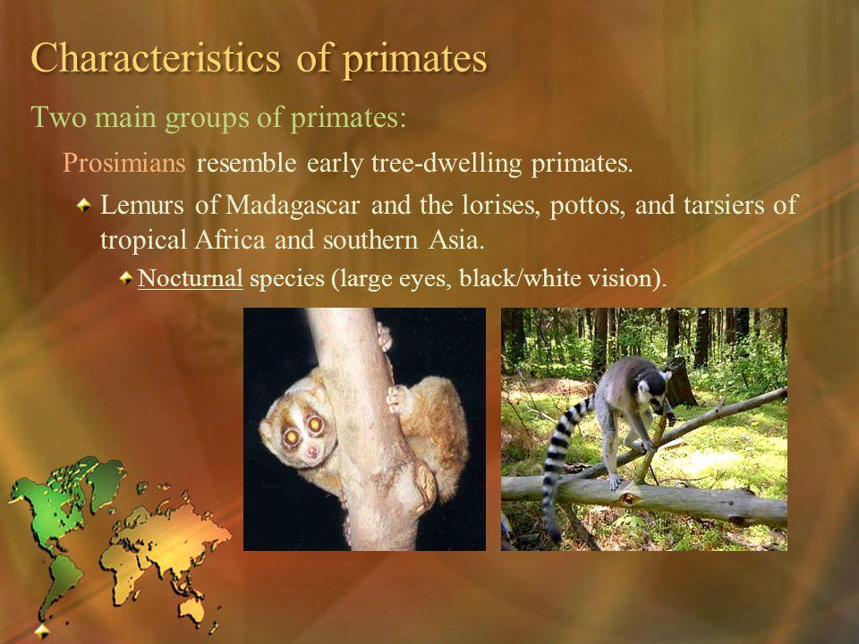 Characteristics of primates