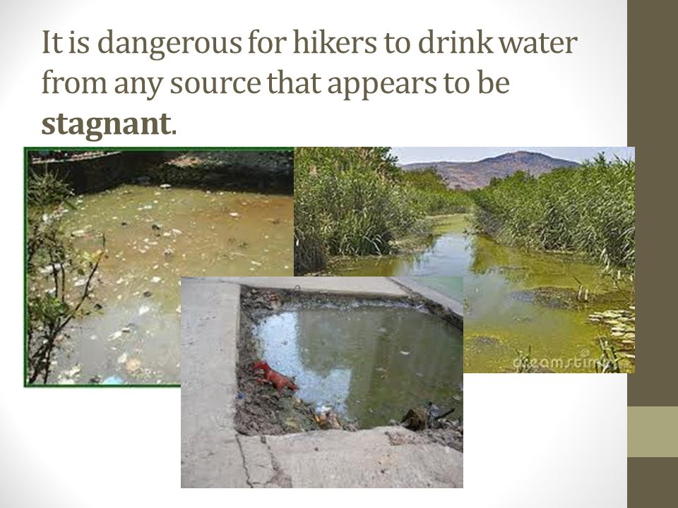 It is dangerous for hikers to drink water from any source that appears to be stagnant.