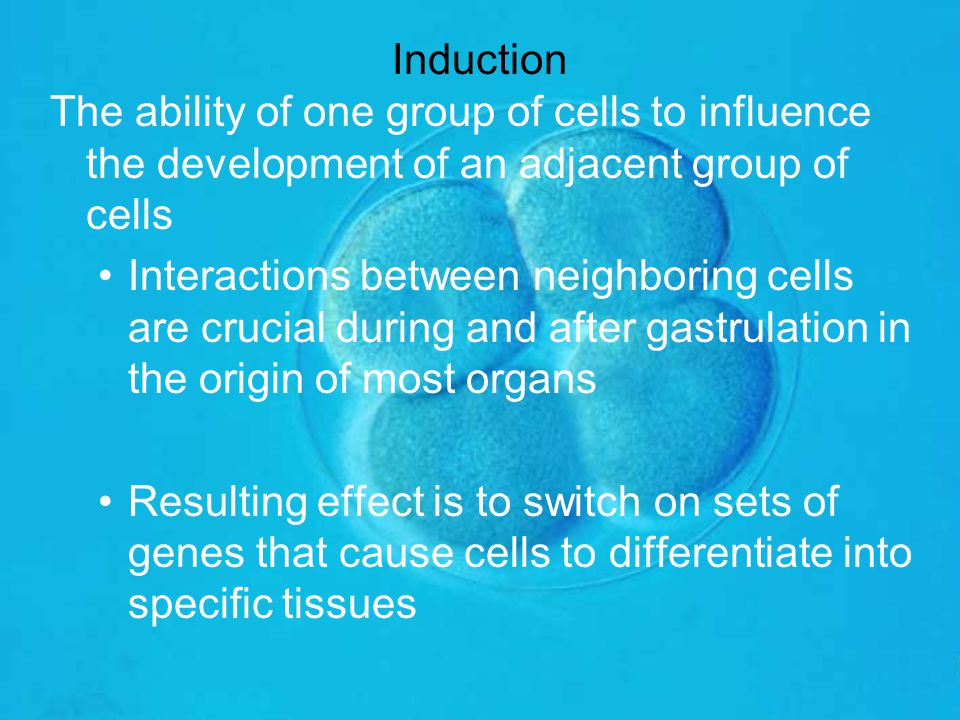 Induction The ability of one group of cells to influence the development of an adjacent group of cells.