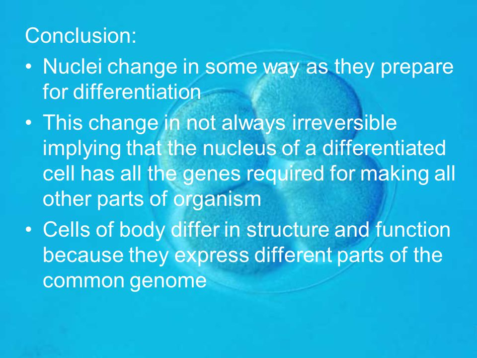 Conclusion: Nuclei change in some way as they prepare for differentiation.
