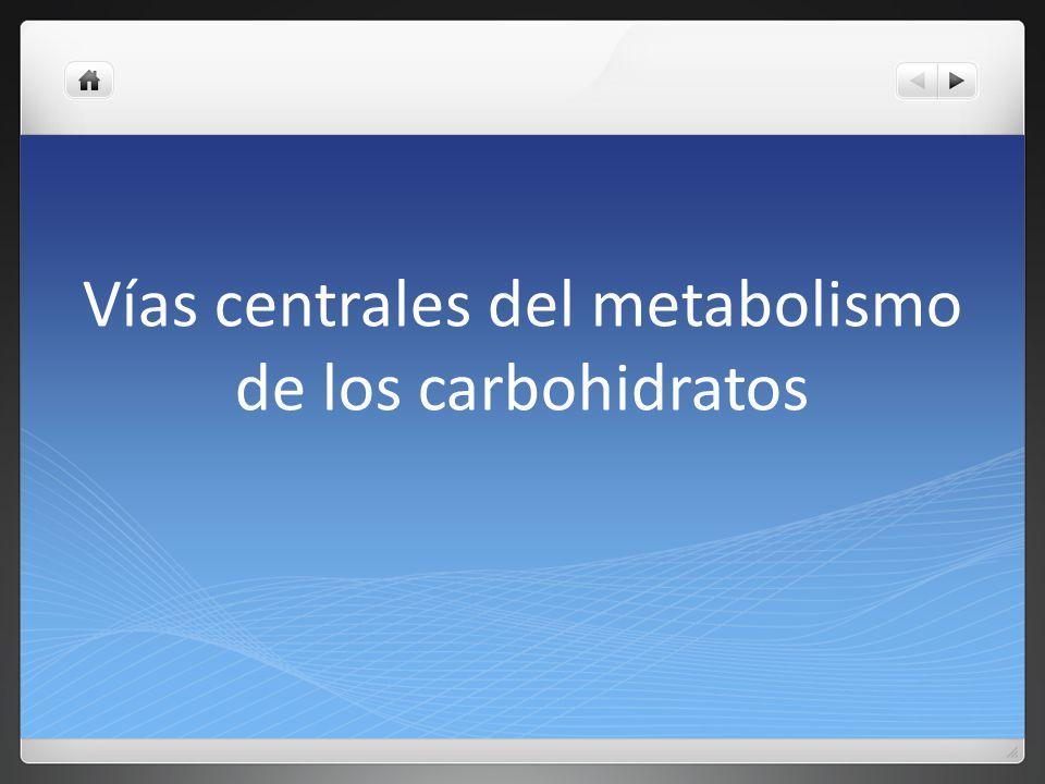 Vías centrales del metabolismo de los carbohidratos