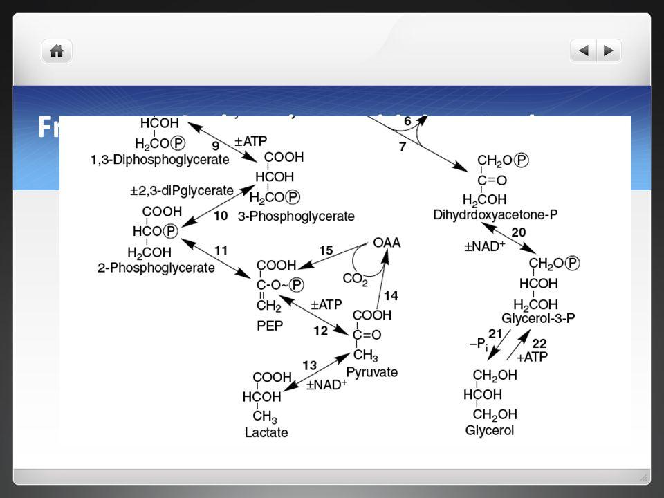 Fructose Bisphosphate Aldolase Pathway