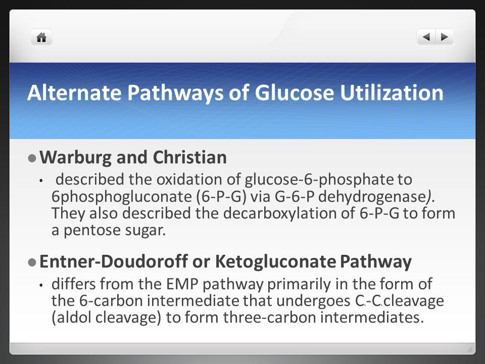 Alternate Pathways of Glucose Utilization