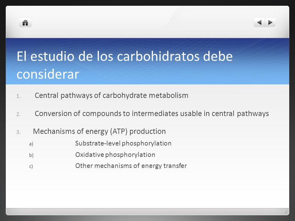 El estudio de los carbohidratos debe considerar