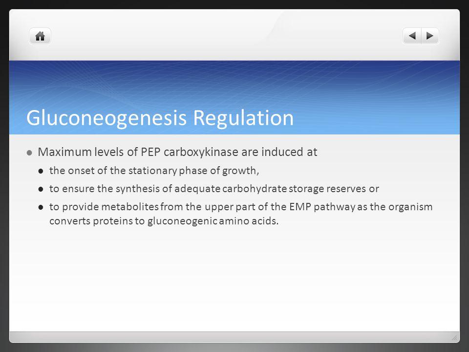 Gluconeogenesis Regulation