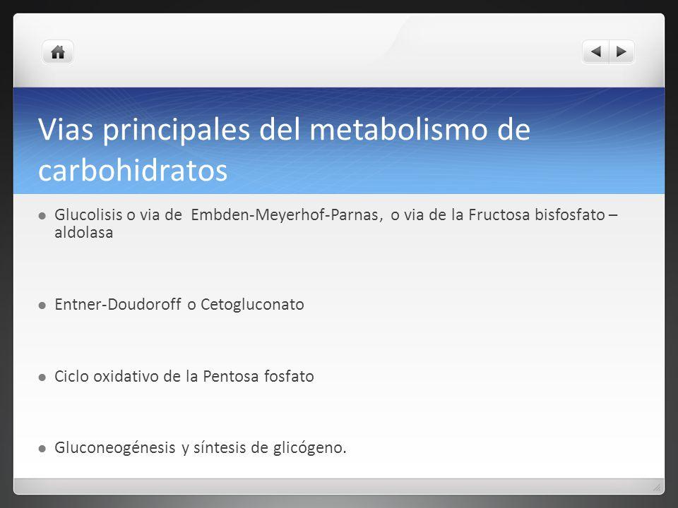 Vias principales del metabolismo de carbohidratos