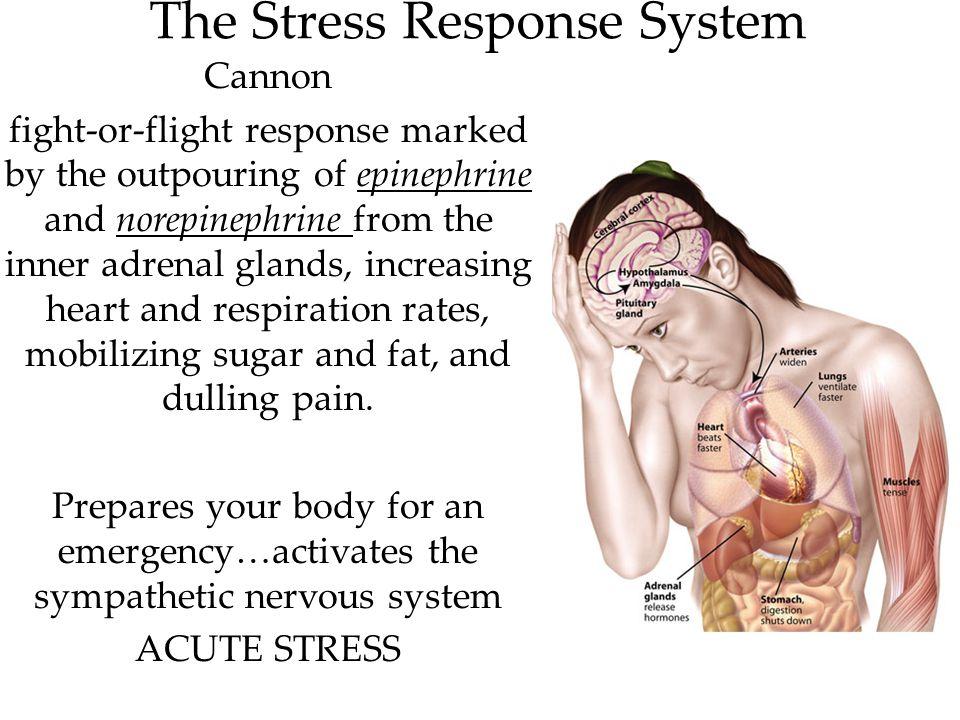 The Stress Response System