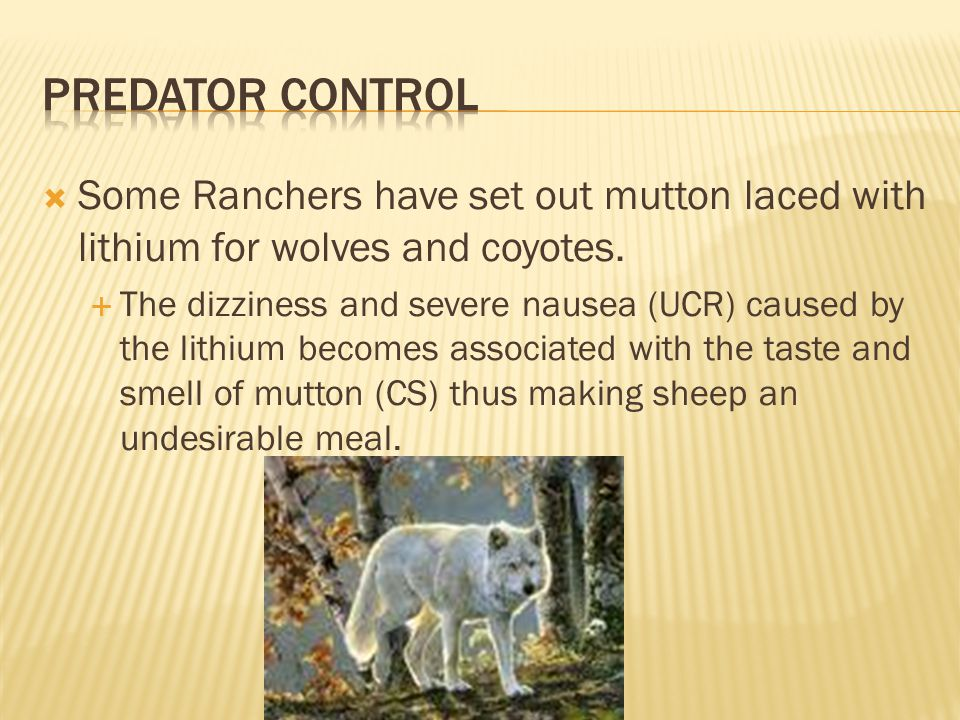 Predator Control Some Ranchers have set out mutton laced with lithium for wolves and coyotes.