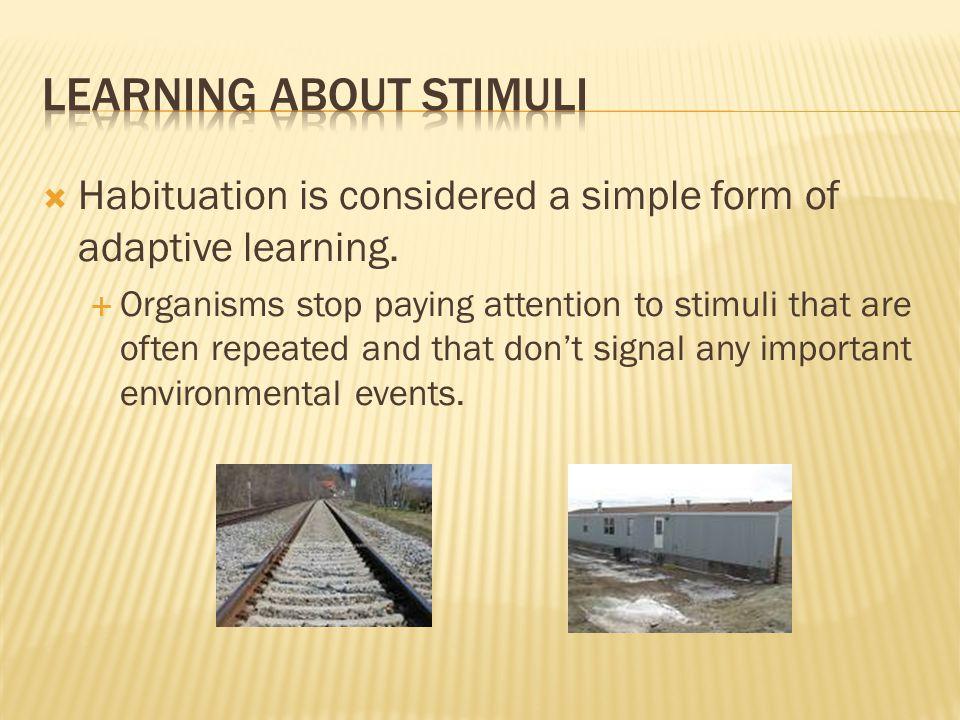 Learning About stimuli