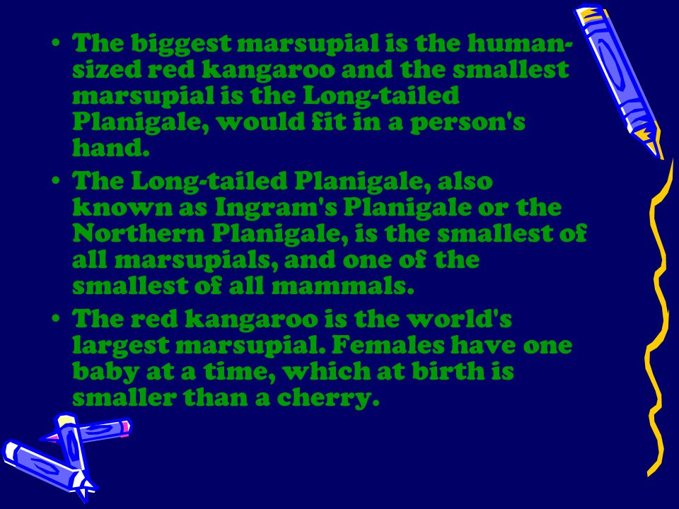 The biggest marsupial is the human-sized red kangaroo and the smallest marsupial is the Long-tailed Planigale, would fit in a person s hand.