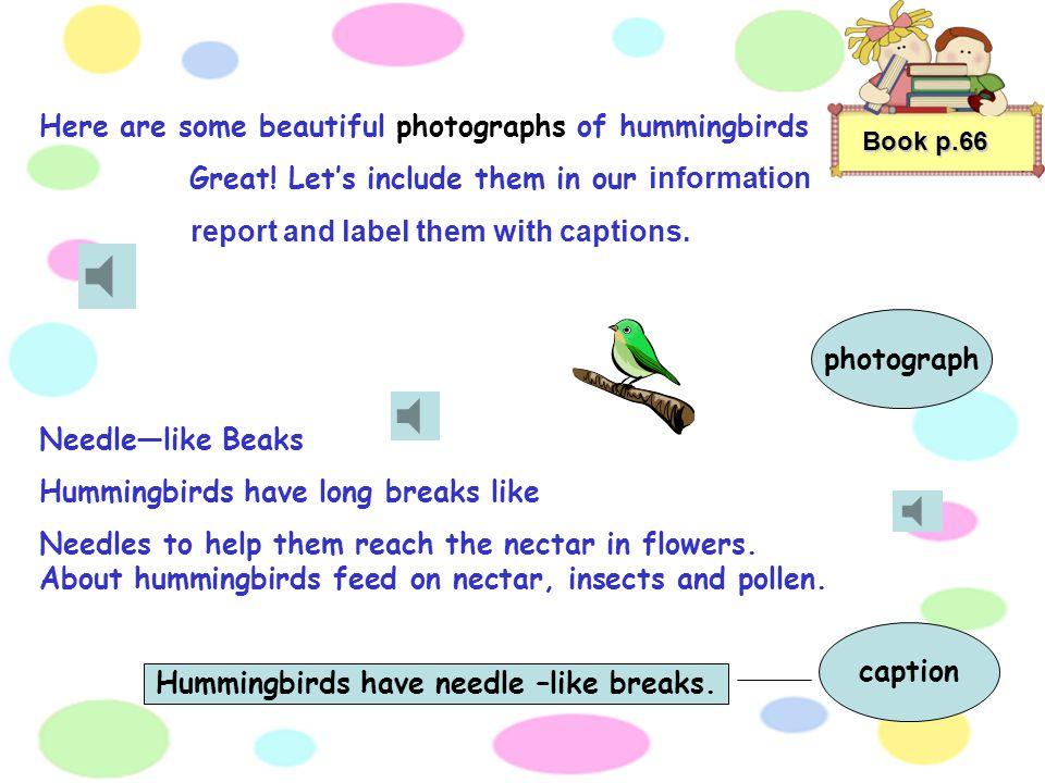 Hummingbirds have needle –like breaks.