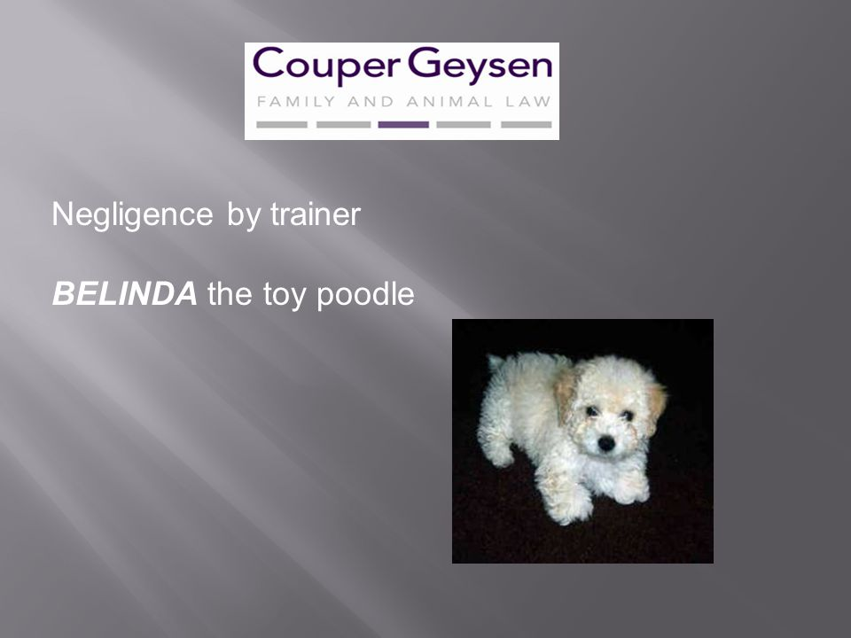 Negligence by trainer BELINDA the toy poodle