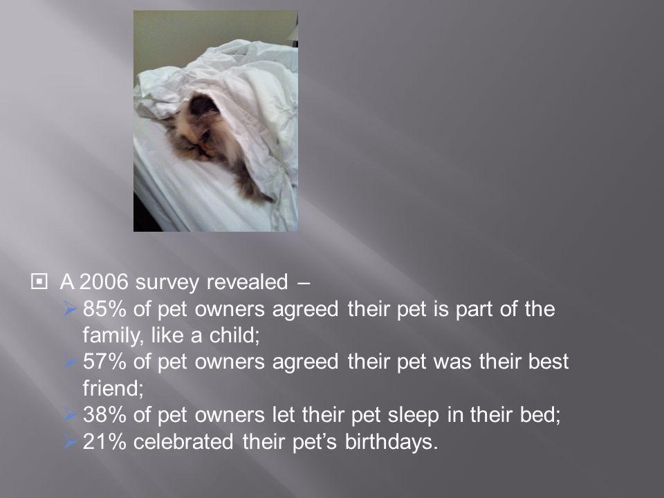 A 2006 survey revealed – 85% of pet owners agreed their pet is part of the family, like a child;
