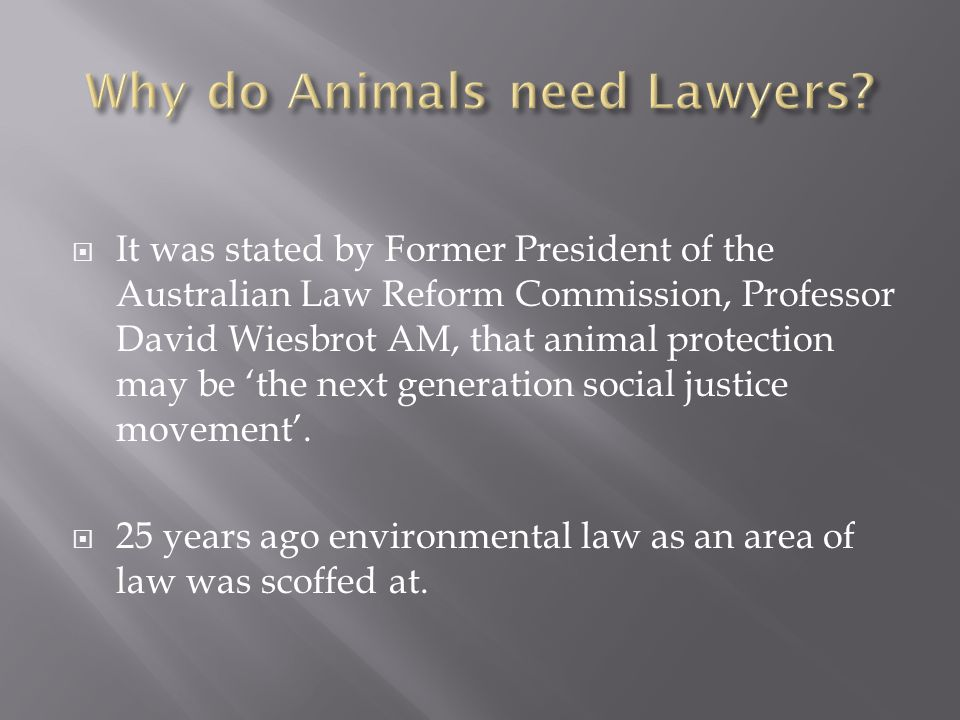 Why do Animals need Lawyers