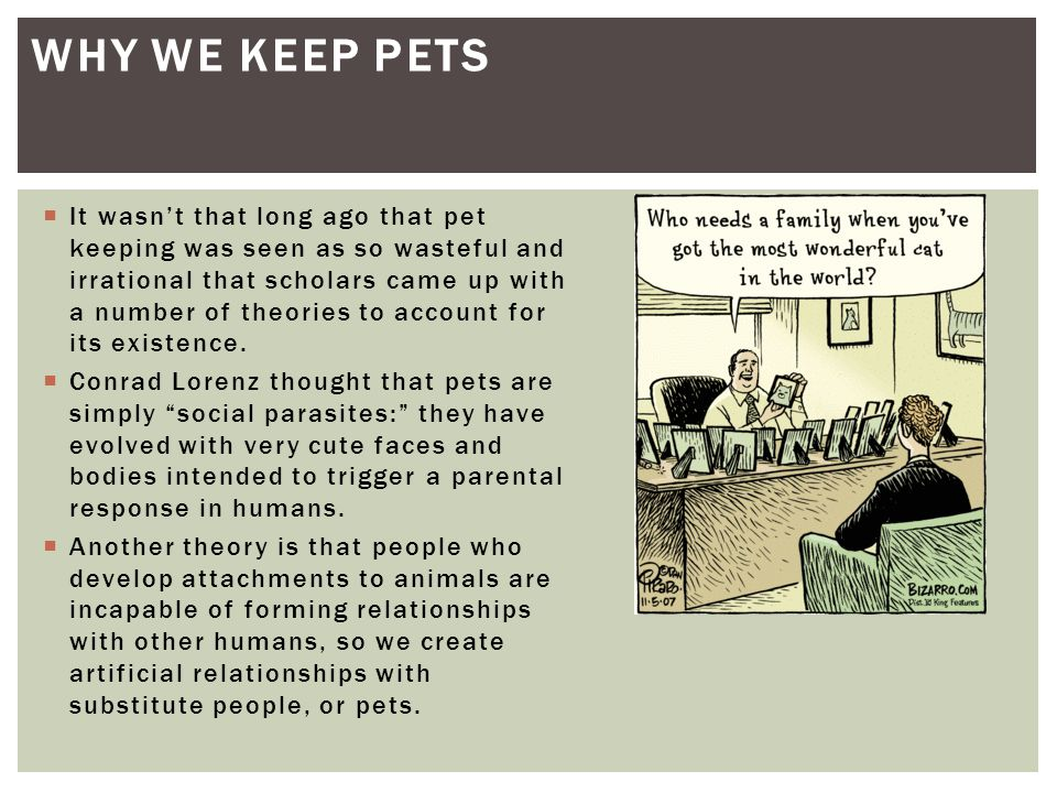Why we keep pets