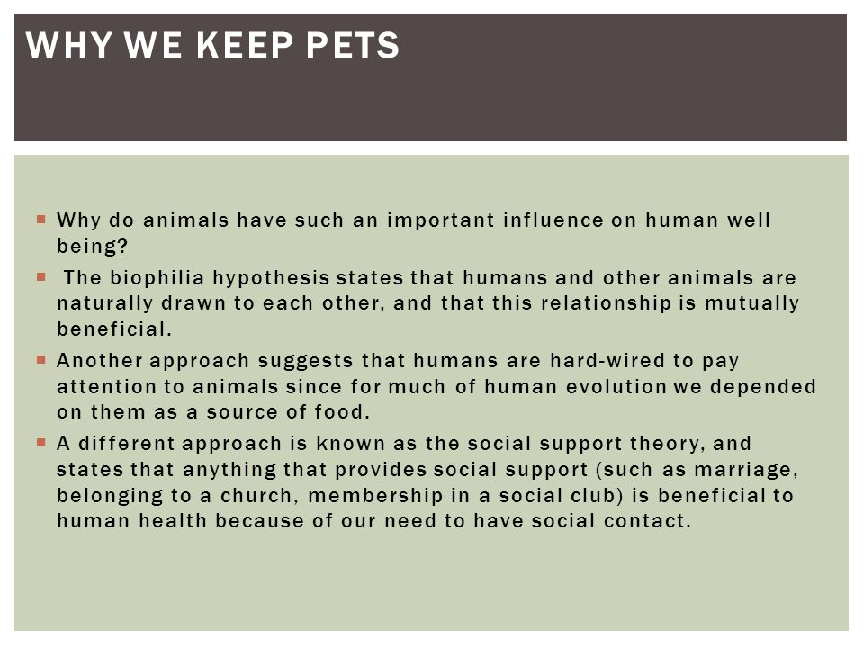 Why we keep pets Why do animals have such an important influence on human well being