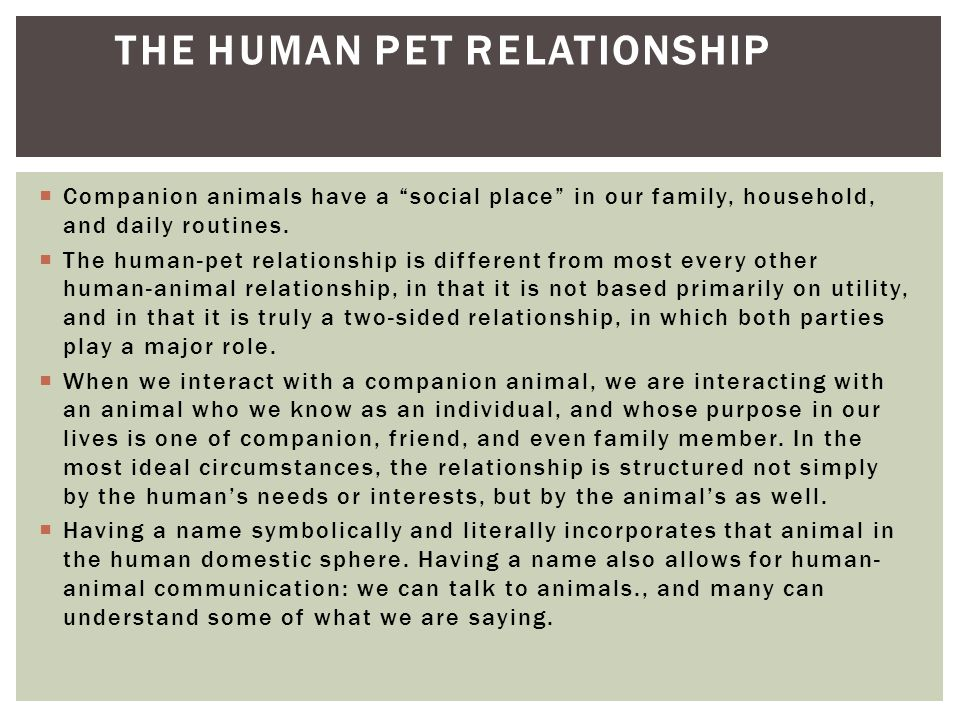 The Human Pet Relationship
