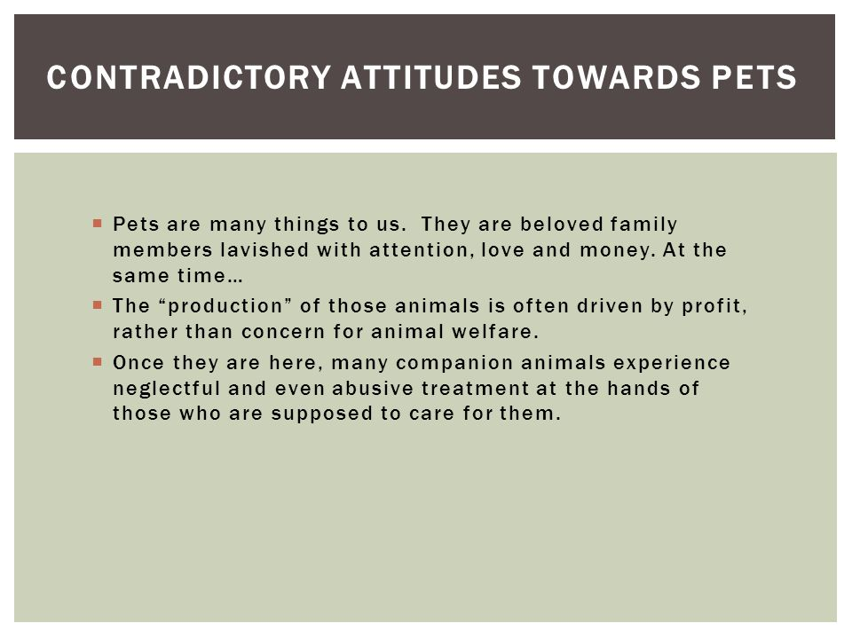 Contradictory Attitudes towards pets