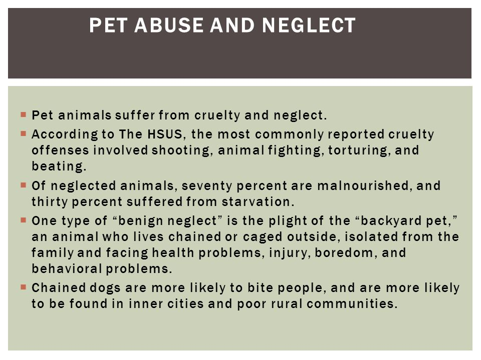 Pet Abuse and Neglect Pet animals suffer from cruelty and neglect.