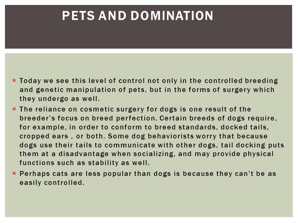 Pets and Domination