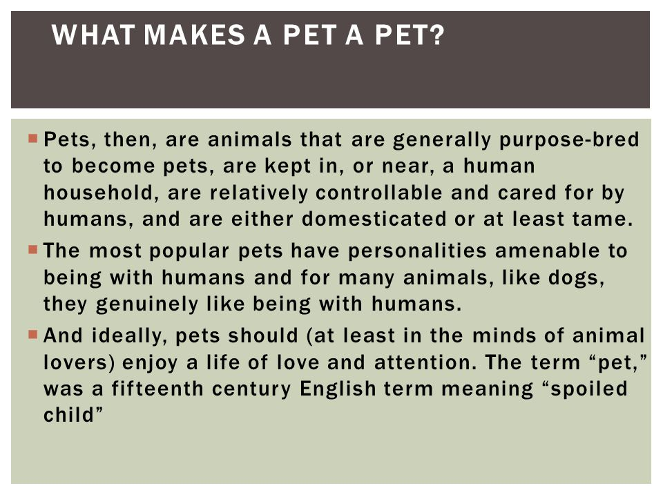 What makes a pet a pet