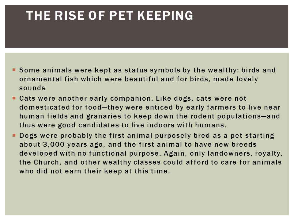 The Rise of Pet Keeping