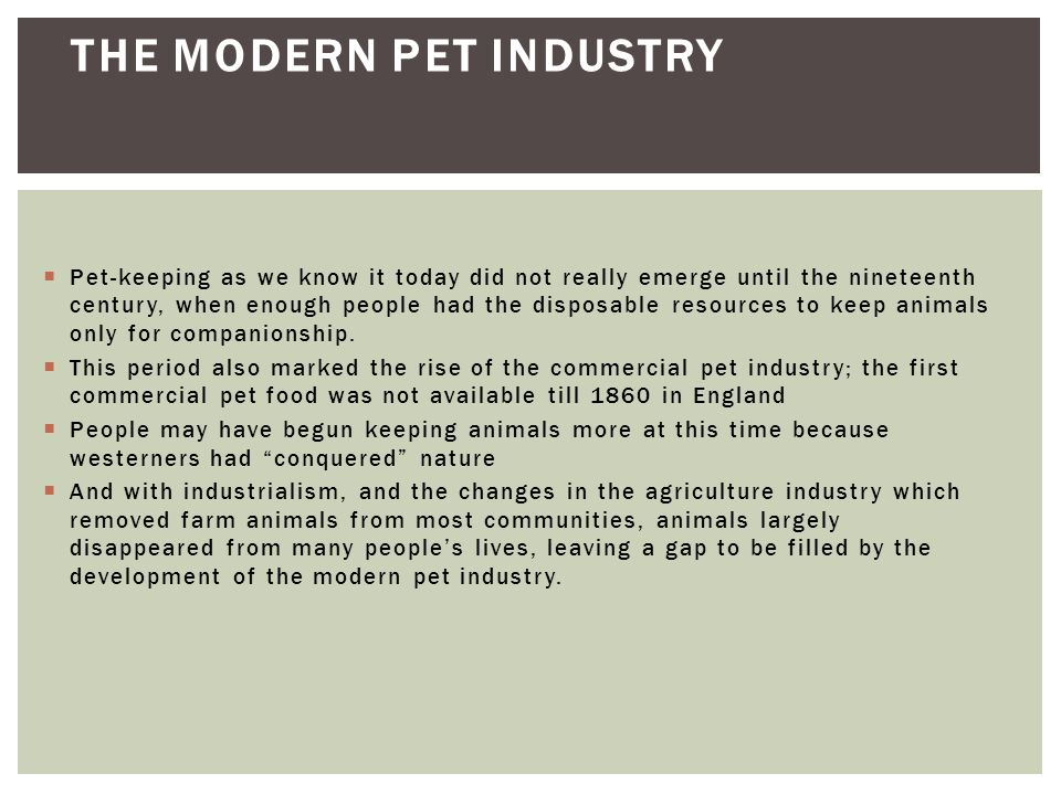 The Modern Pet Industry