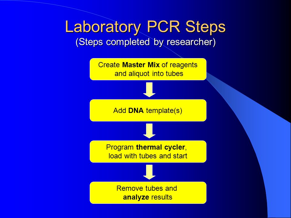 Laboratory PCR Steps (Steps completed by researcher)