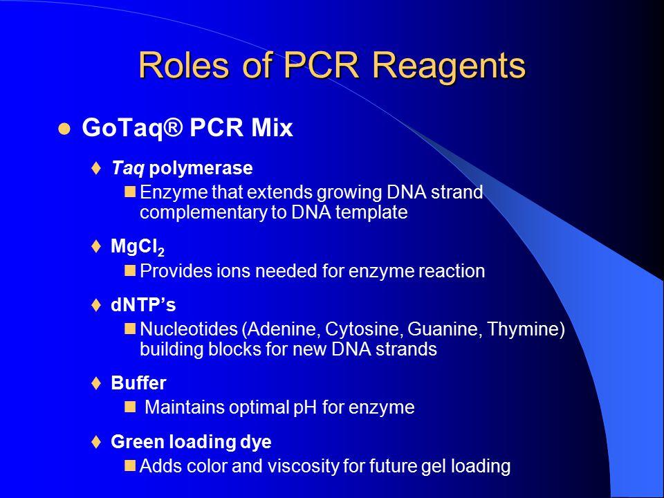 Roles of PCR Reagents GoTaq® PCR Mix Taq polymerase