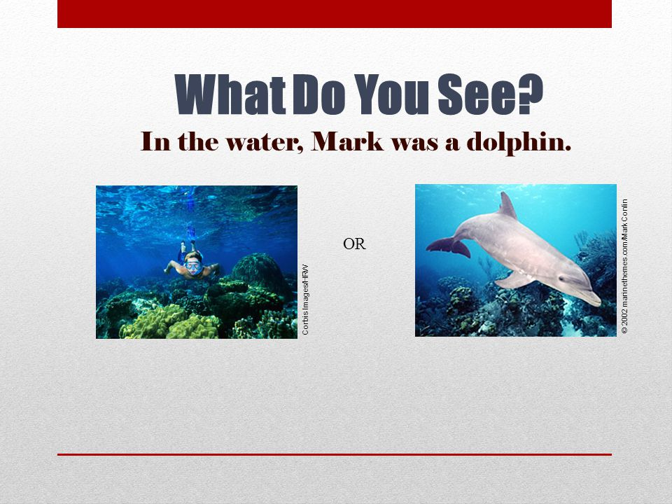 In the water, Mark was a dolphin.