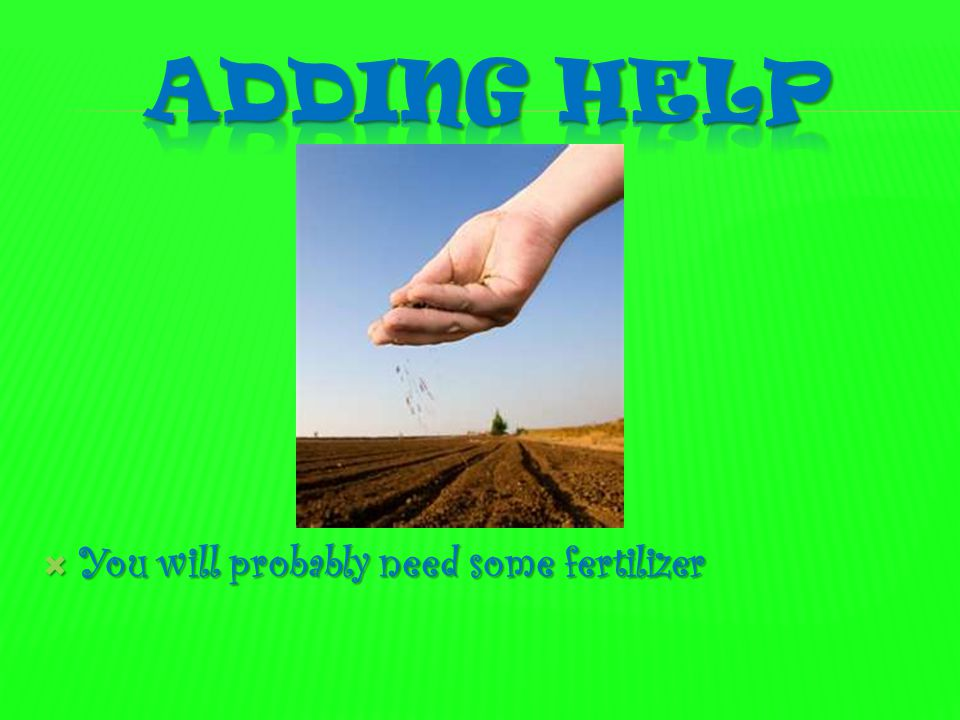 Adding help You will probably need some fertilizer