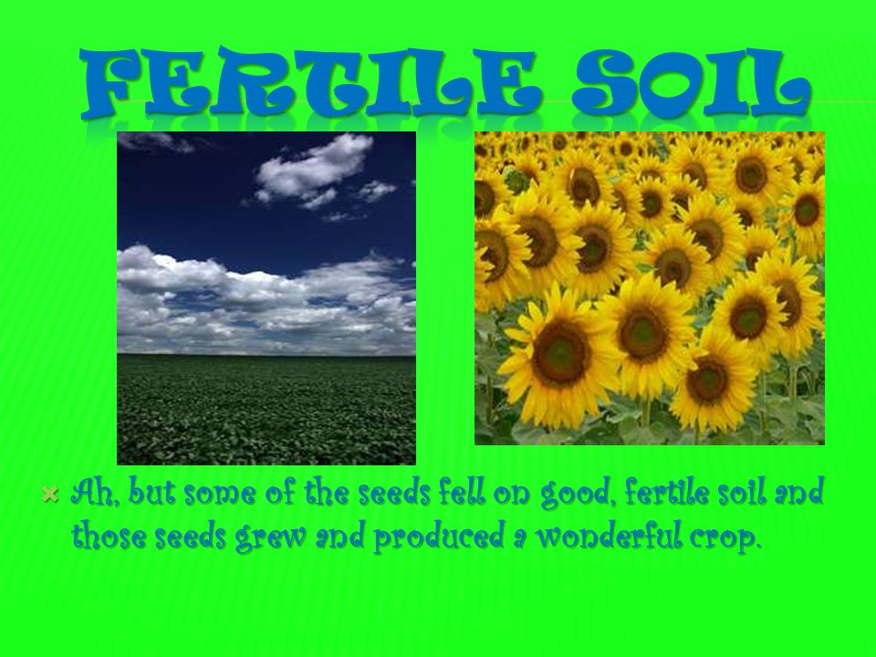 Fertile soil Ah, but some of the seeds fell on good, fertile soil and those seeds grew and produced a wonderful crop.