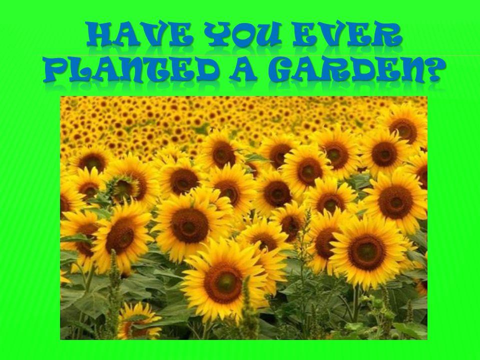 Have you ever planted a garden
