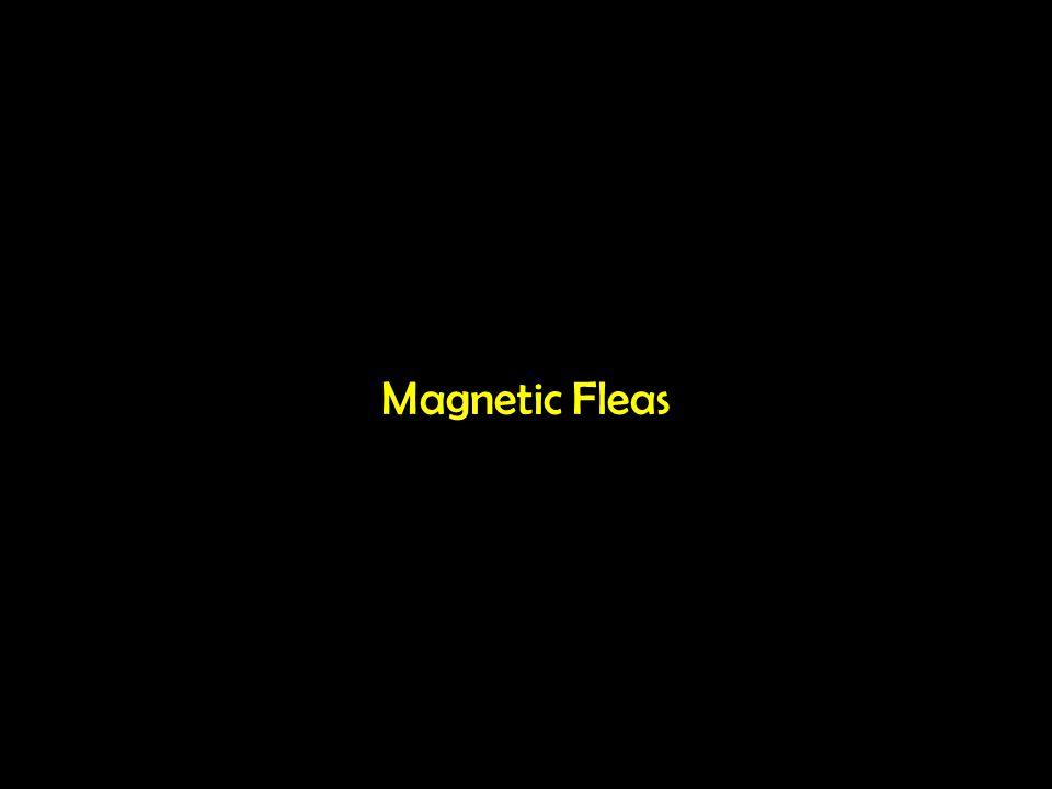 Magnetic Fleas