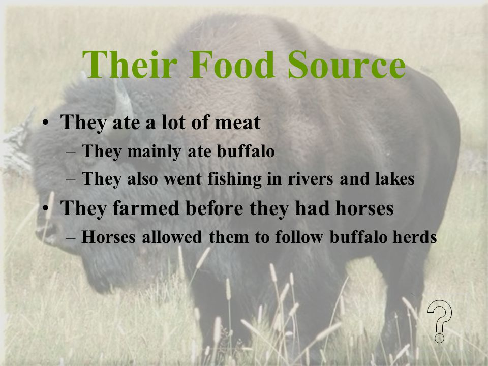 Their Food Source They ate a lot of meat
