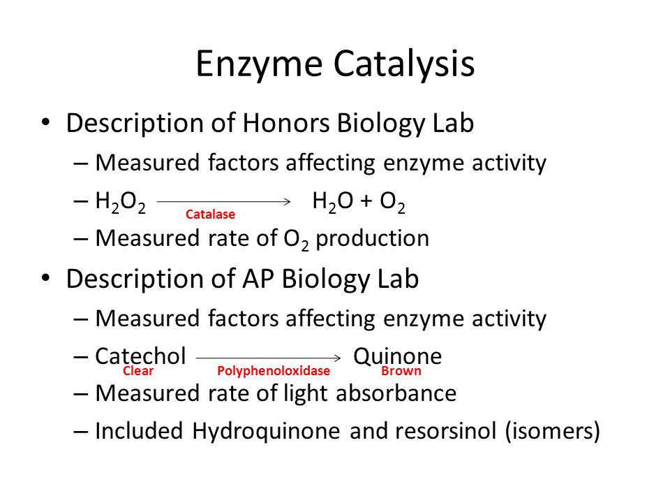 Enzyme Catalysis Description of Honors Biology Lab