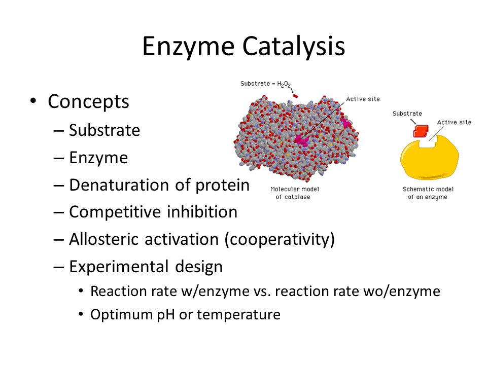 Enzyme Catalysis Concepts Substrate Enzyme Denaturation of protein